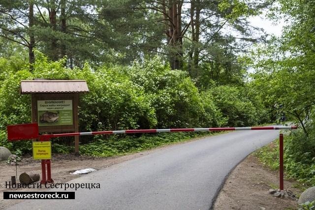 Власти хотят оставить шлагбаум на дороге на Глухое озеро в Сестрорецке
